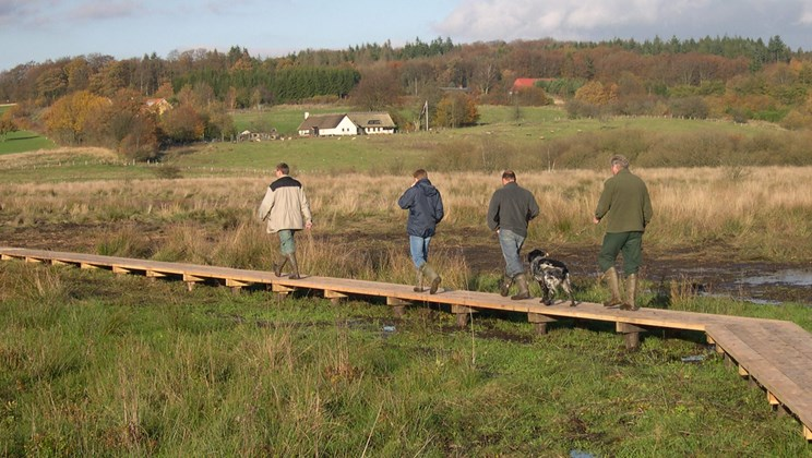 Boardwalk i Rugballe Mose